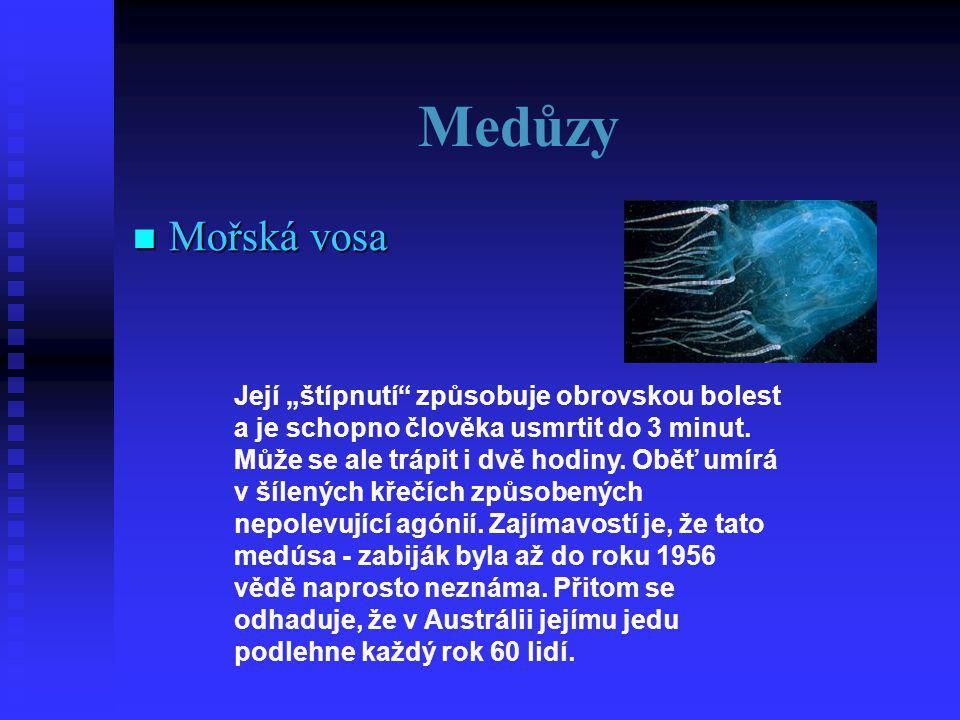 Medůzy Mořská vosa.