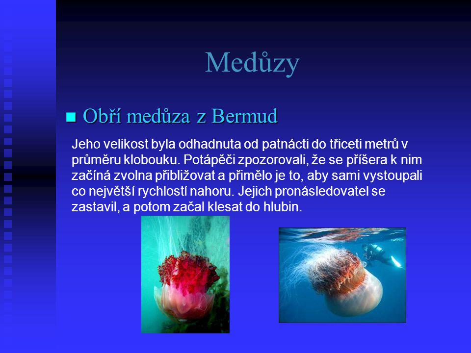 Medůzy Obří medůza z Bermud