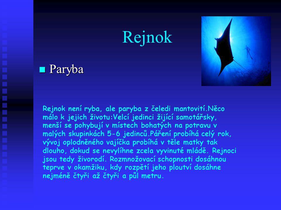 Rejnok Paryba.