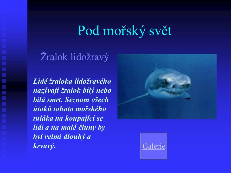 Pod mořský svět Žralok lidožravý