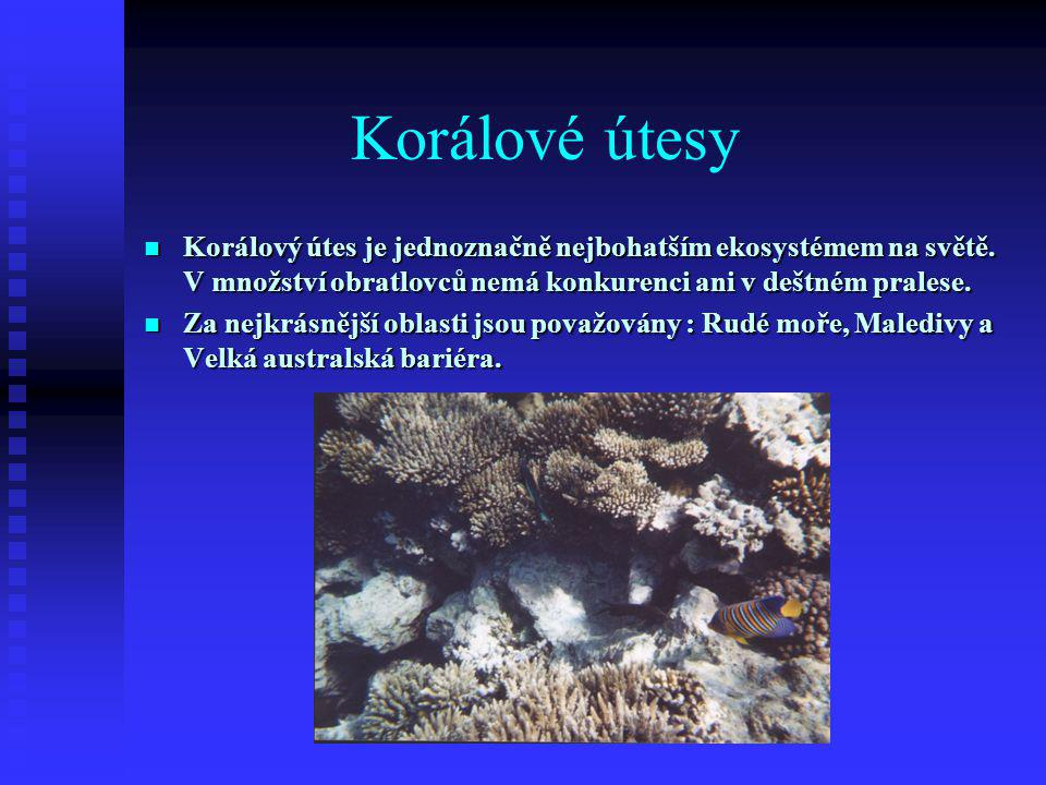 Korálové útesy Korálový útes je jednoznačně nejbohatším ekosystémem na světě. V množství obratlovců nemá konkurenci ani v deštném pralese.