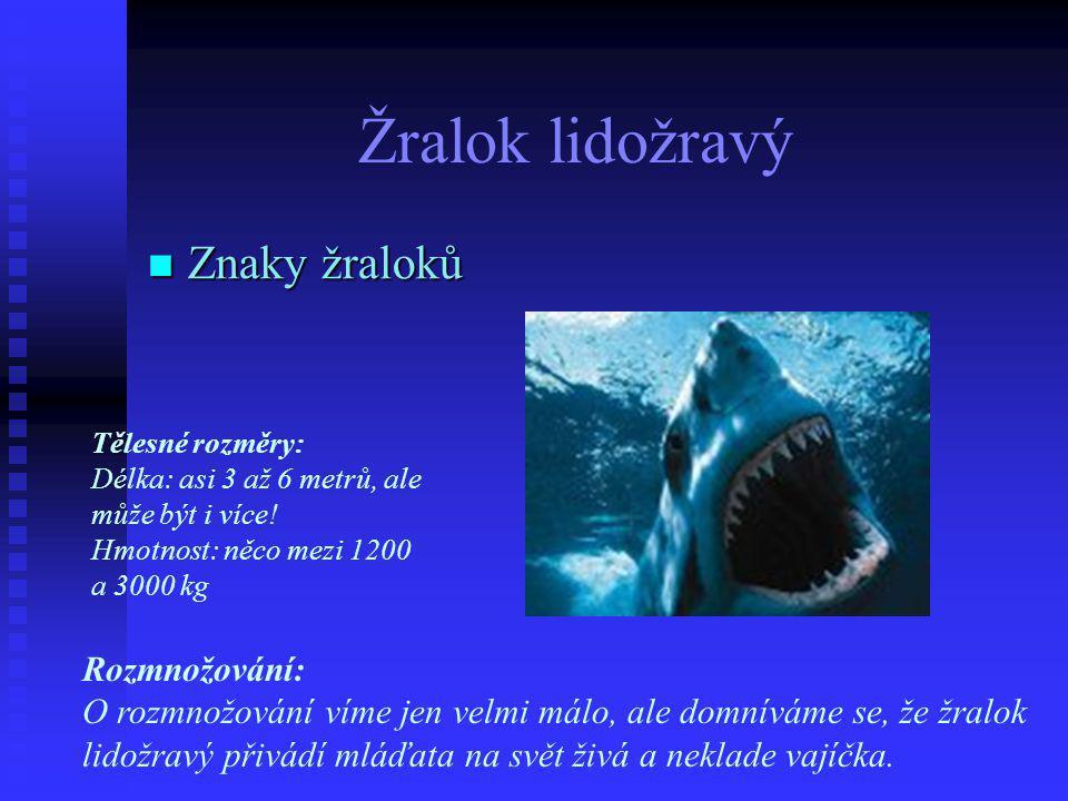 Žralok lidožravý Znaky žraloků