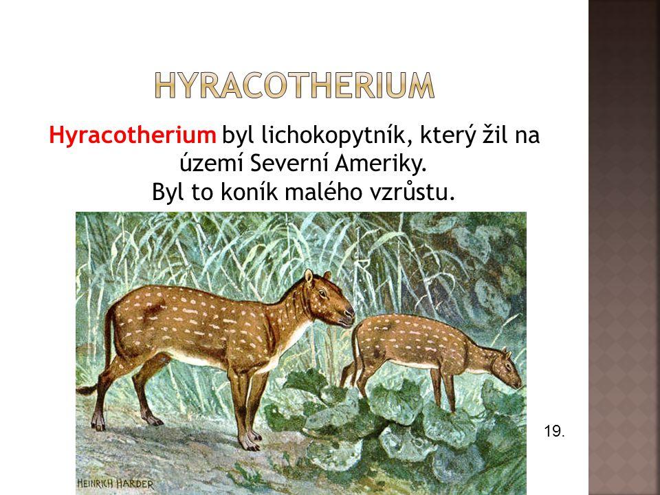 Hyracotherium Hyracotherium byl lichokopytník, který žil na území Severní Ameriky. Byl to koník malého vzrůstu.