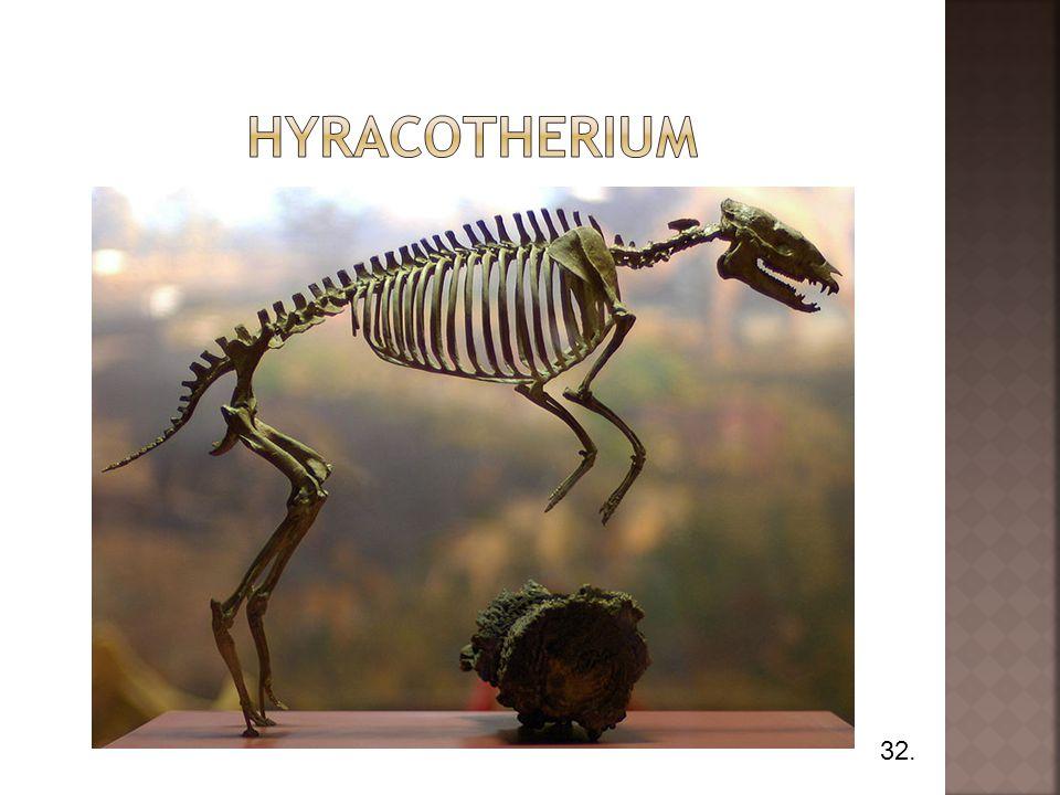Hyracotherium 32.