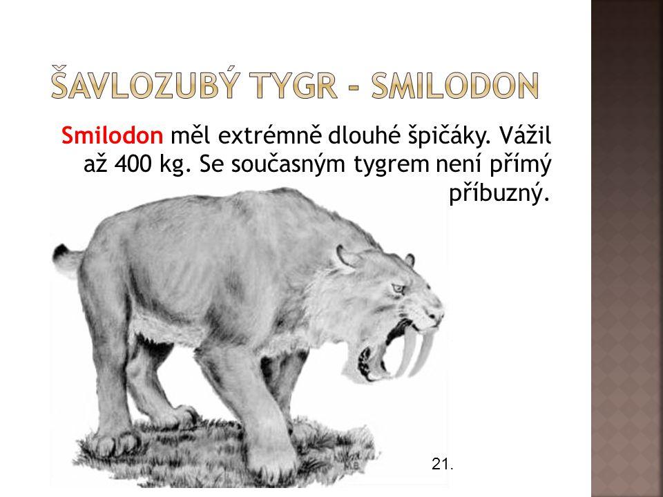 Šavlozubý tygr - Smilodon
