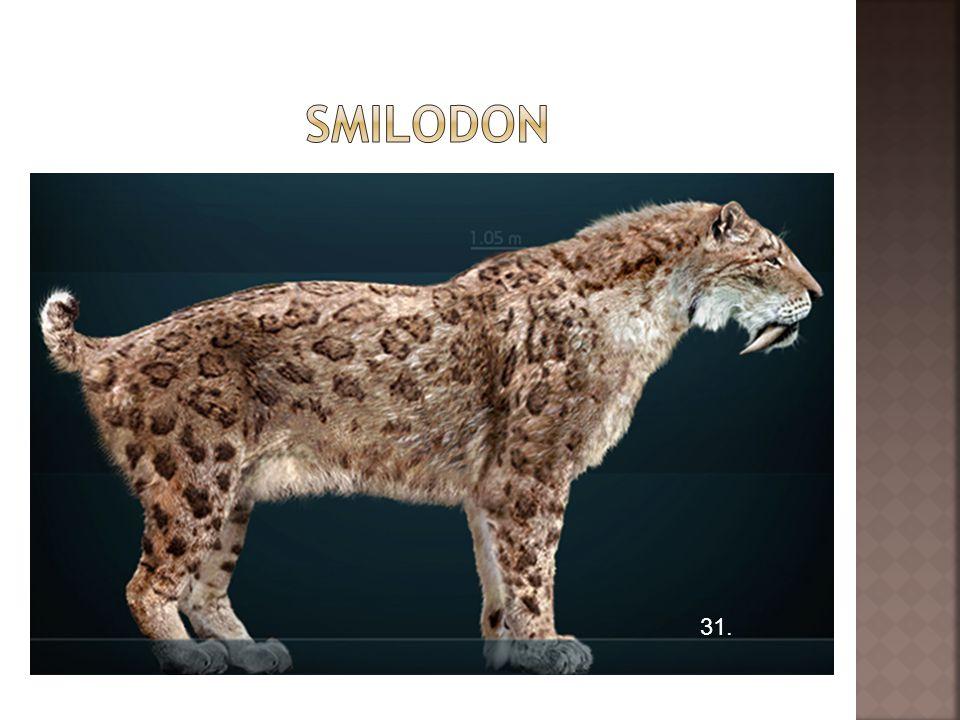smilodon 31.