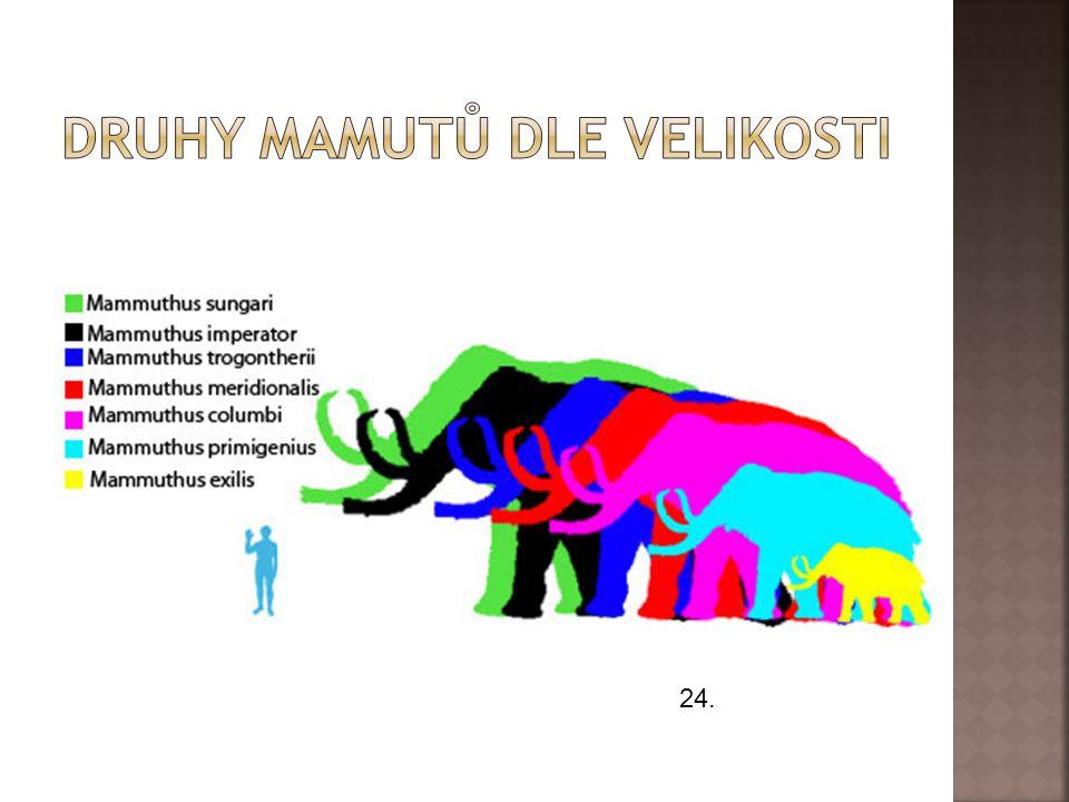 Druhy mamutů dle velikosti