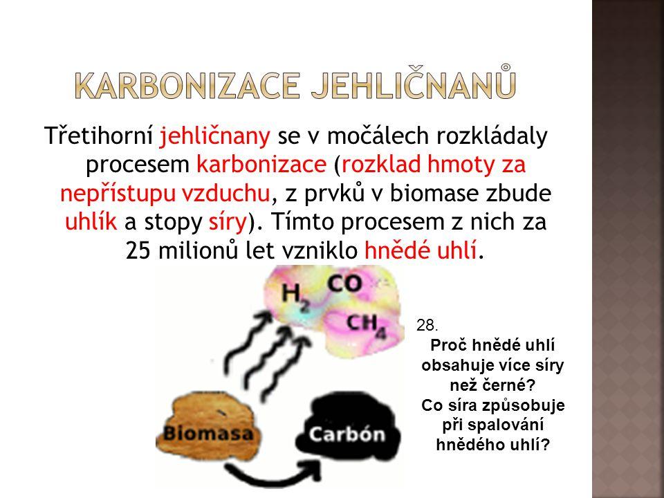 Karbonizace jehličnanů