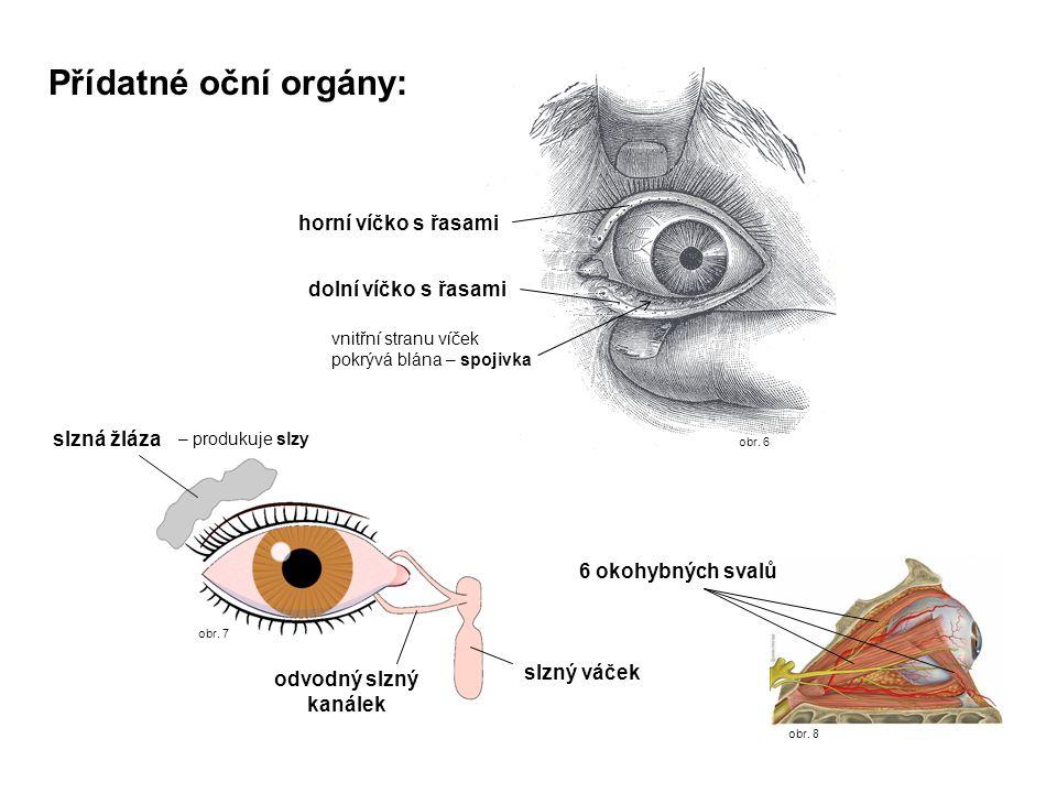 Přídatné oční orgány: horní víčko s řasami dolní víčko s řasami