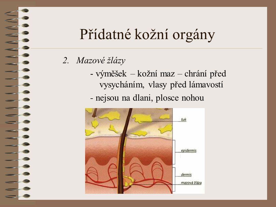 Přídatné kožní orgány Mazové žlázy
