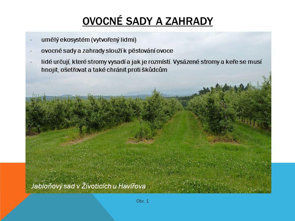 Ovocné sady a zahrady Jabloňový sad v Životicích u Havířova
