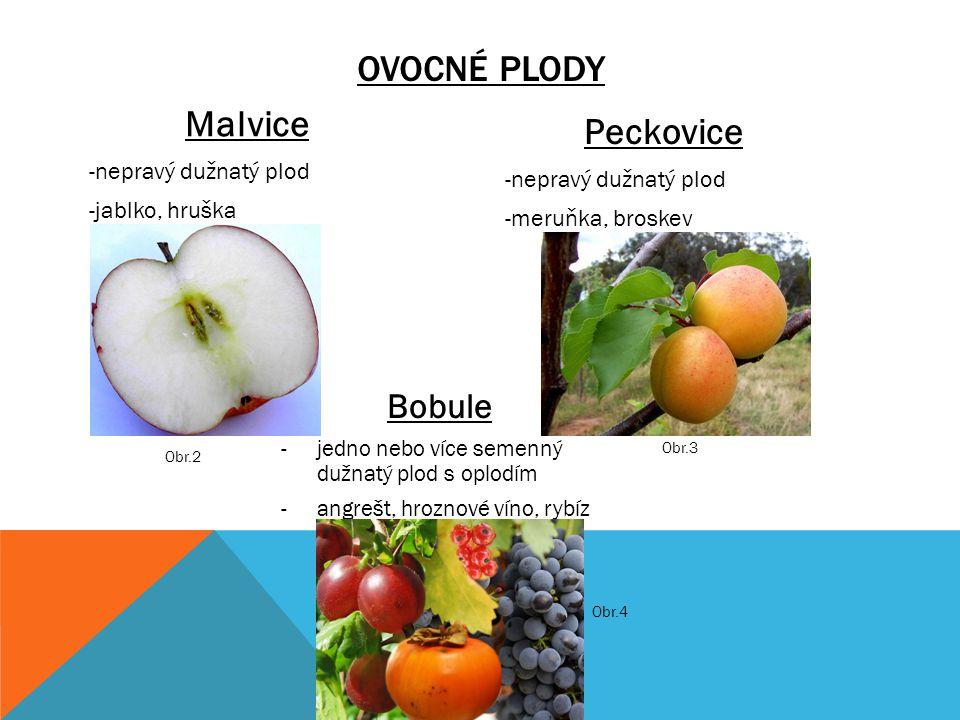 Ovocné plody Malvice Peckovice Bobule nepravý dužnatý plod