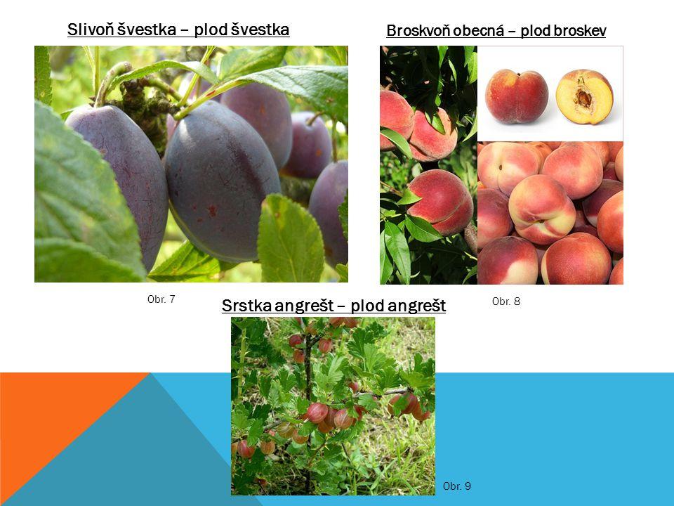 Slivoň švestka – plod švestka