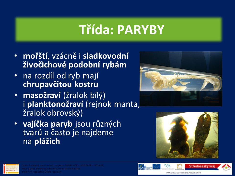 Třída: PARYBY mořští, vzácně i sladkovodní živočichové podobní rybám
