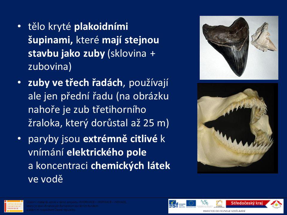 tělo kryté plakoidními šupinami, které mají stejnou stavbu jako zuby (sklovina + zubovina)