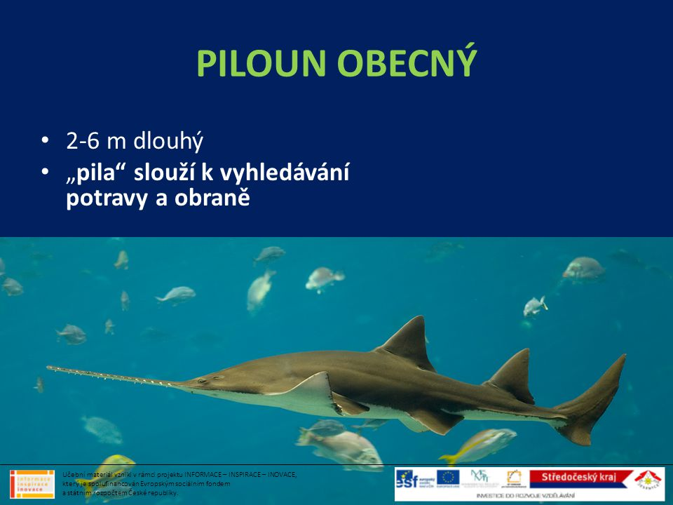PILOUN OBECNÝ 2-6 m dlouhý