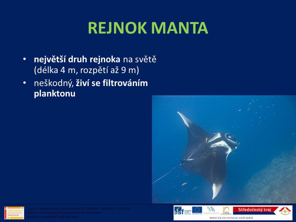 REJNOK MANTA největší druh rejnoka na světě (délka 4 m, rozpětí až 9 m) neškodný, živí se filtrováním planktonu.