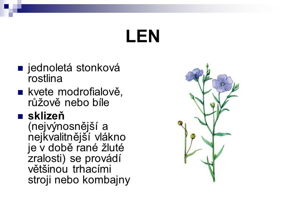 LEN jednoletá stonková rostlina kvete modrofialově, růžově nebo bíle