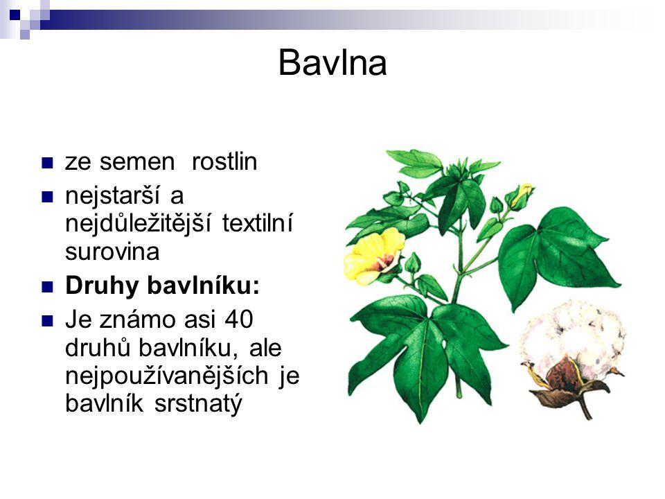 Bavlna ze semen rostlin nejstarší a nejdůležitější textilní surovina
