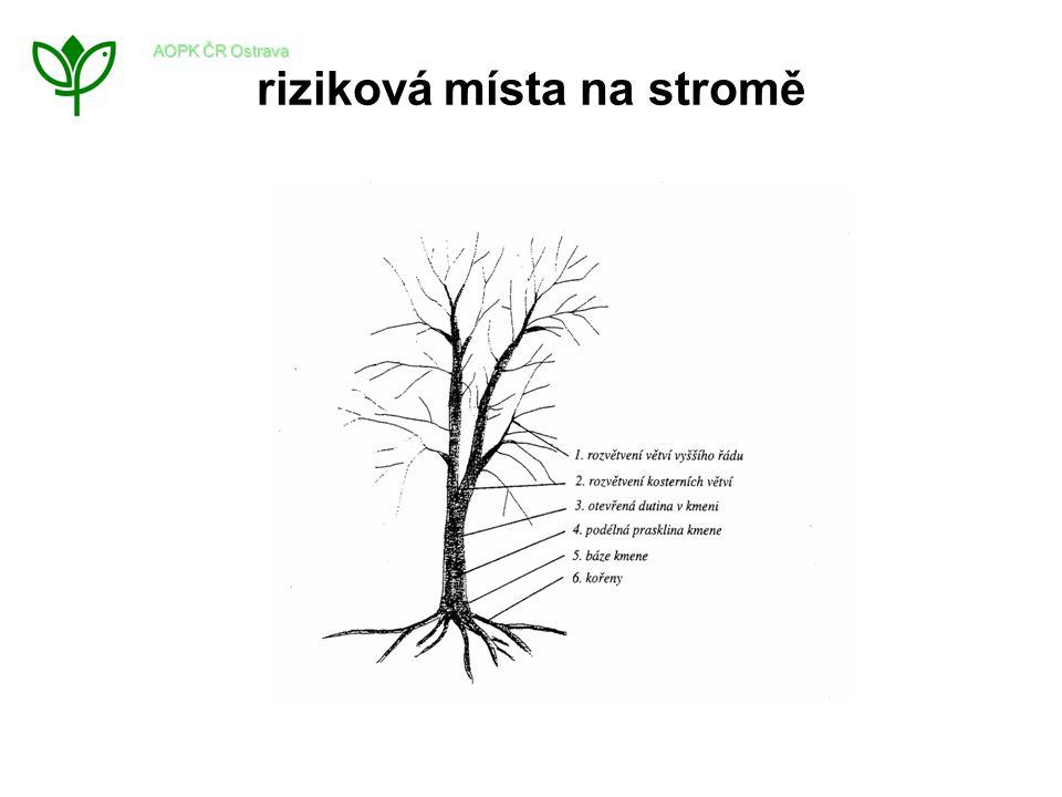 riziková místa na stromě