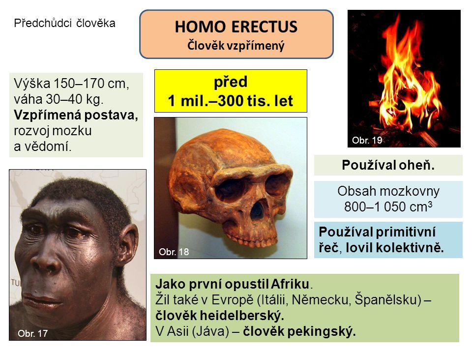 HOMO ERECTUS před 1 mil.–300 tis. let Člověk vzpřímený