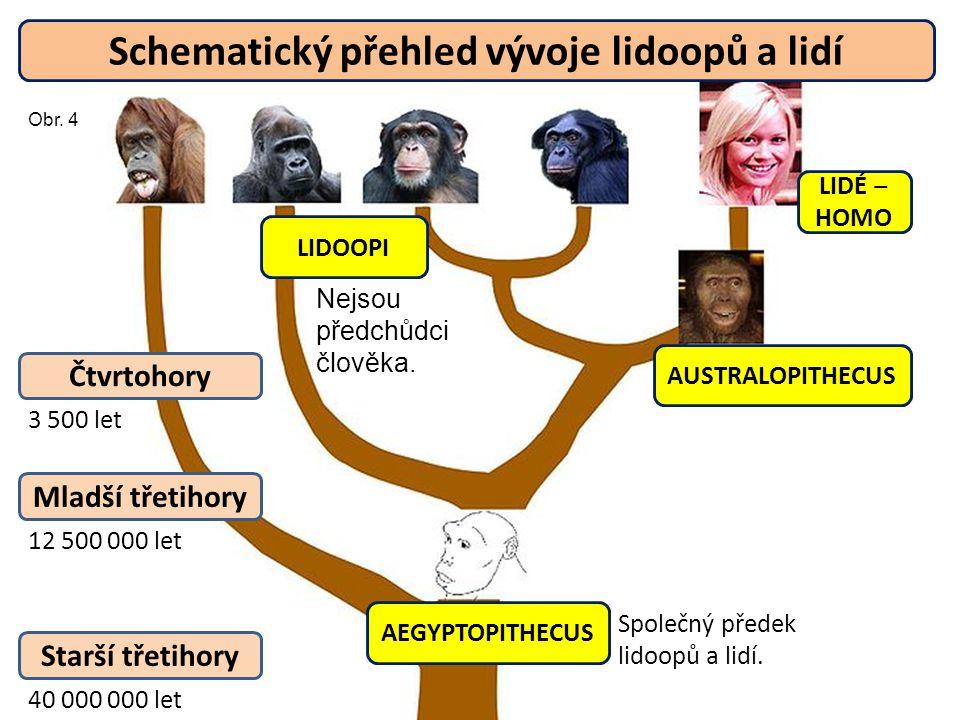 Schematický přehled vývoje lidoopů a lidí