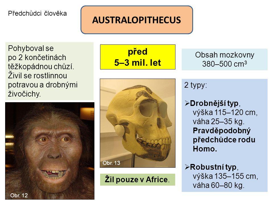 AUSTRALOPITHECUS před 5–3 mil. let Pohyboval se