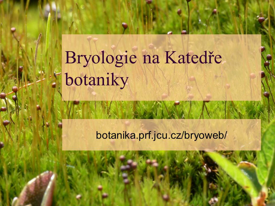 Bryologie na Katedře botaniky