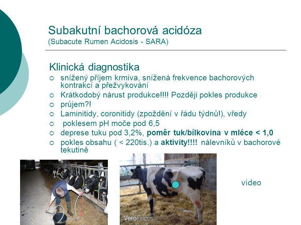 Subakutní bachorová acidóza (Subacute Rumen Acidosis - SARA)