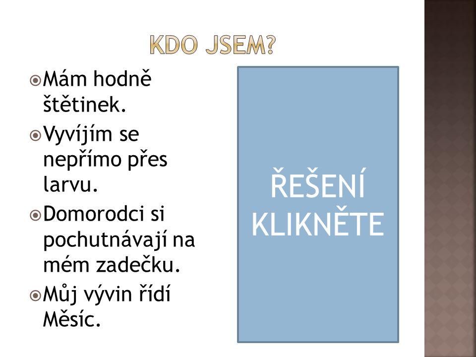 ŘEŠENÍ KLIKNĚTE Kdo jsem Mám hodně štětinek.