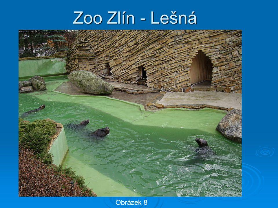 Zoo Zlín - Lešná Obrázek 8