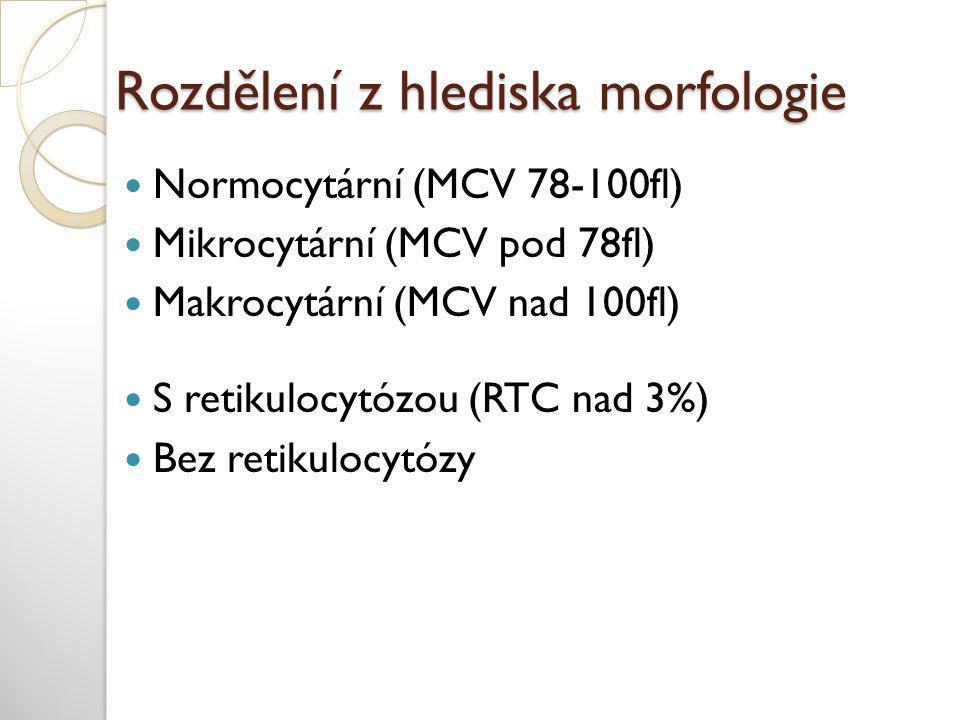 Rozdělení z hlediska morfologie