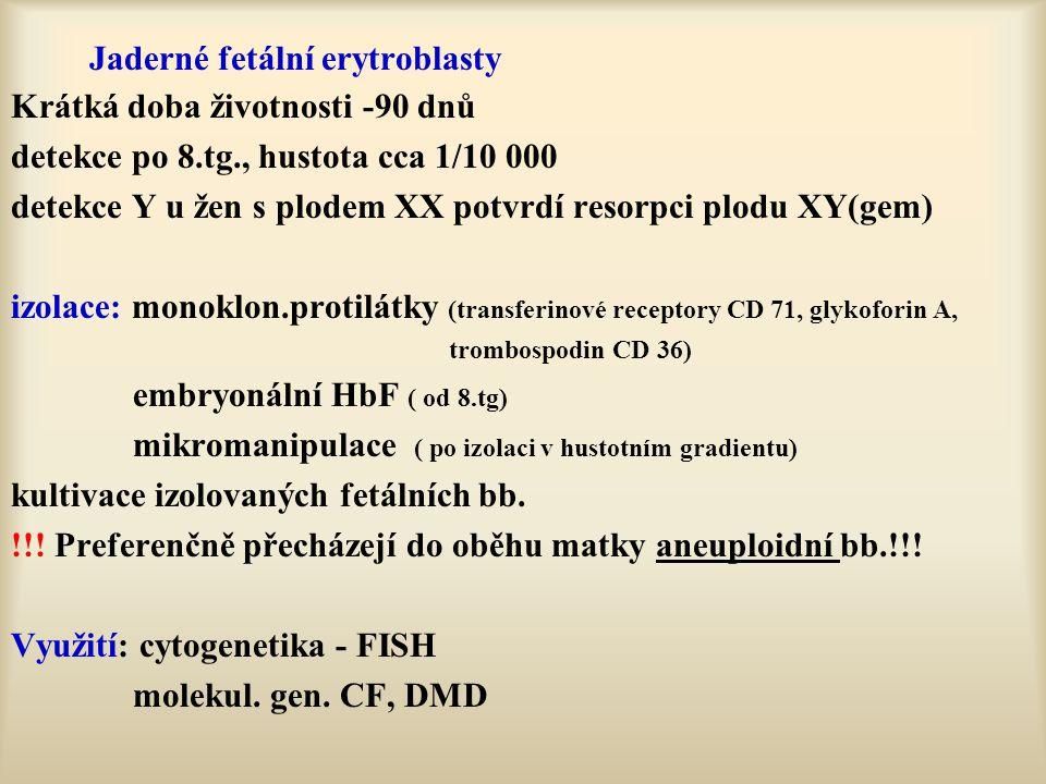 Jaderné fetální erytroblasty