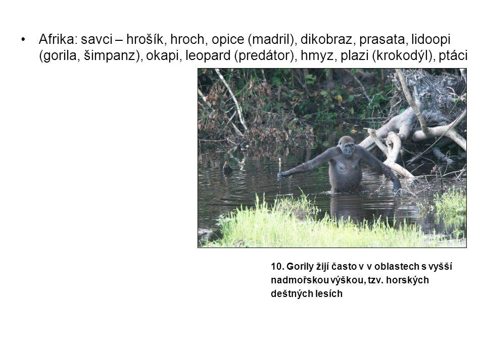 Afrika: savci – hrošík, hroch, opice (madril), dikobraz, prasata, lidoopi (gorila, šimpanz), okapi, leopard (predátor), hmyz, plazi (krokodýl), ptáci