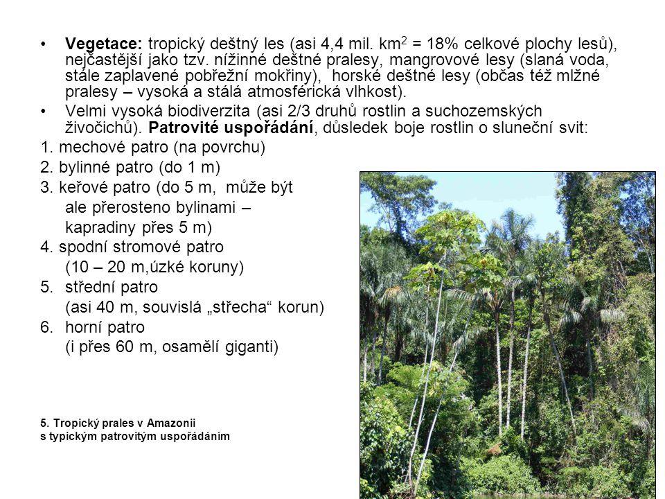 1. mechové patro (na povrchu) 2. bylinné patro (do 1 m)