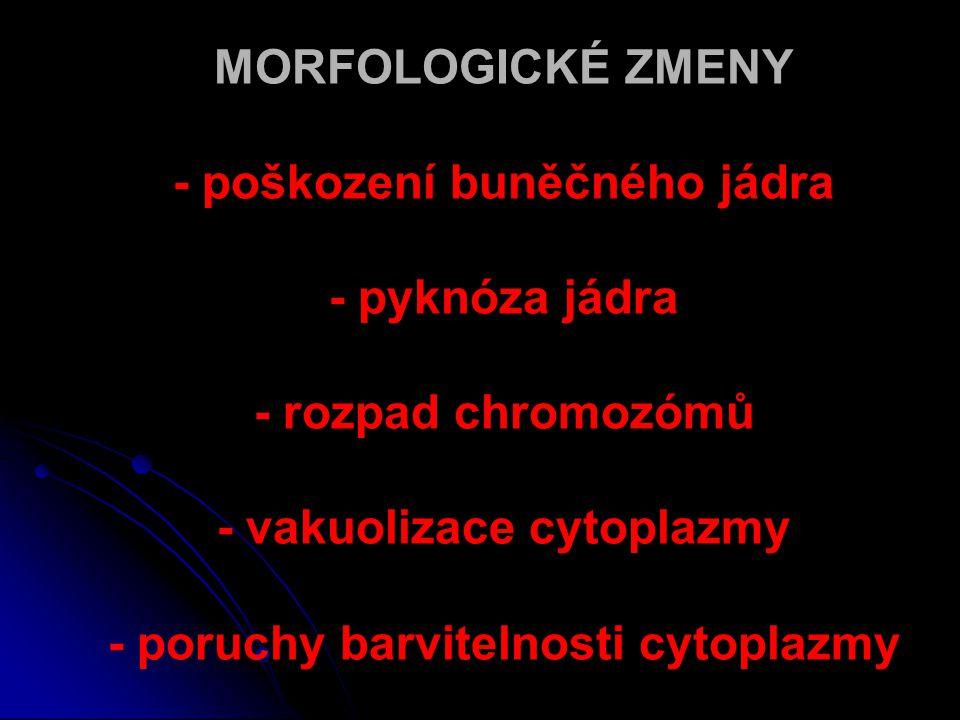 MORFOLOGICKÉ ZMENY - poškození buněčného jádra - pyknóza jádra