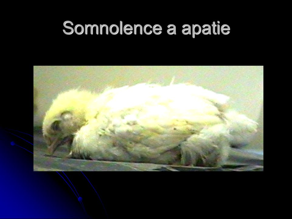 Somnolence a apatie