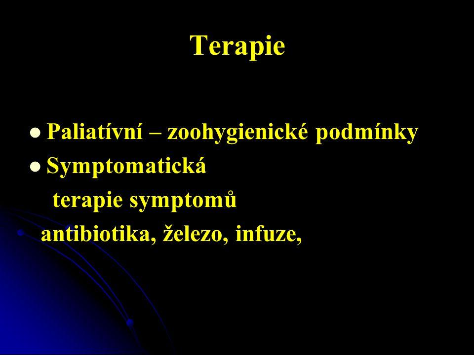 Terapie Paliatívní – zoohygienické podmínky Symptomatická