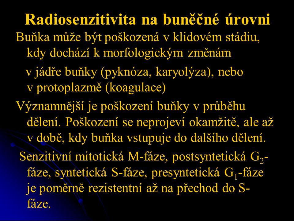 Radiosenzitivita na buněčné úrovni