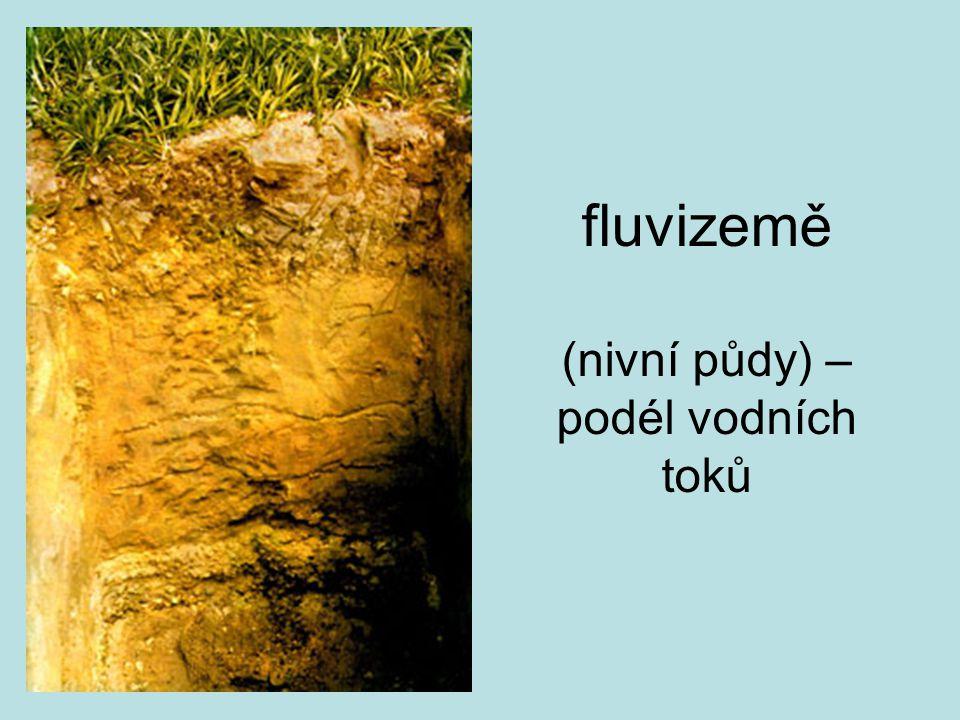 fluvizemě (nivní půdy) – podél vodních toků
