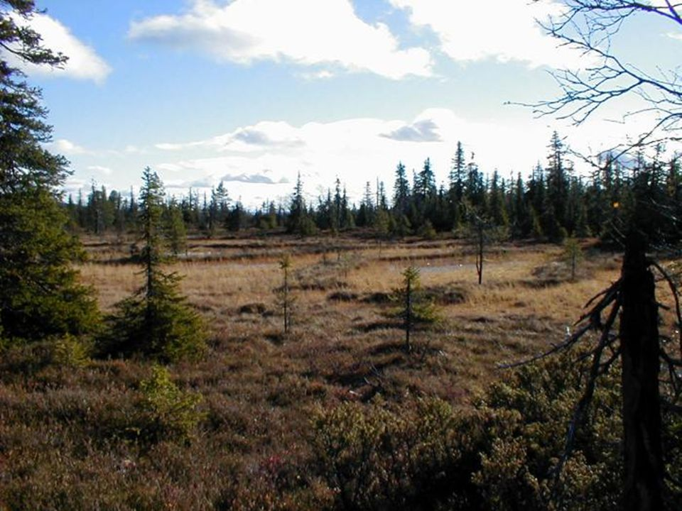 Těžba rašeliny – drancování biotopů
