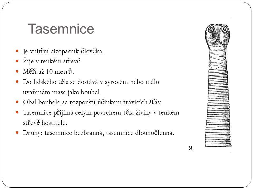 Tasemnice Je vnitřní cizopasník člověka. Žije v tenkém střevě.