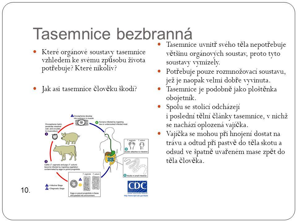 Tasemnice bezbranná Tasemnice uvnitř svého těla nepotřebuje většinu orgánových soustav, proto tyto soustavy vymizely.