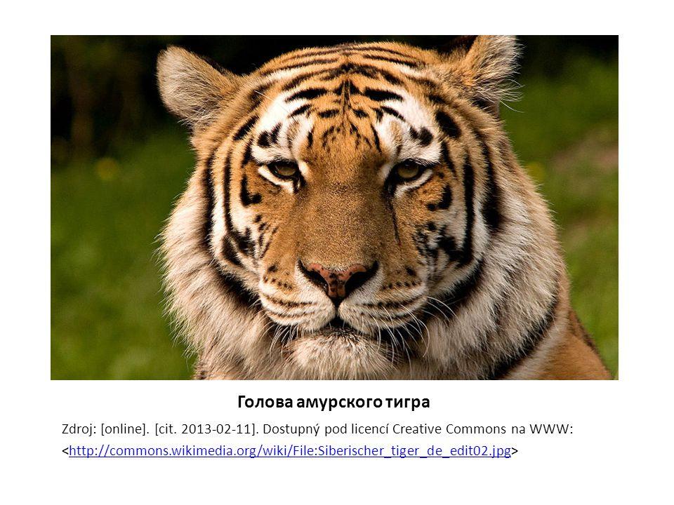 Голова амурского тигра