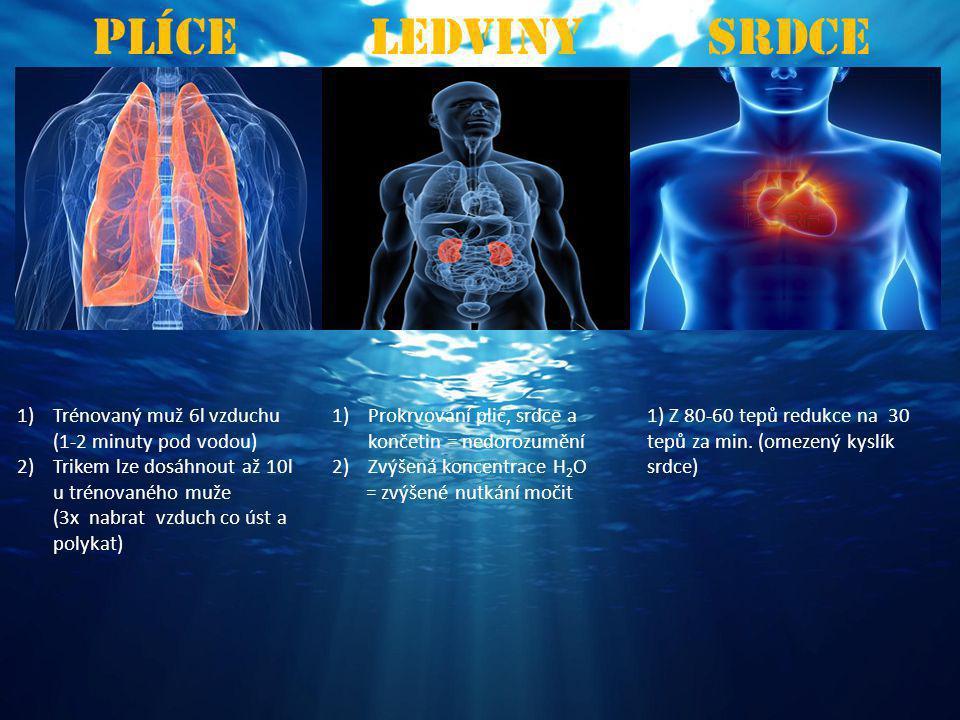 Plíce Ledviny Srdce Trénovaný muž 6l vzduchu (1-2 minuty pod vodou)