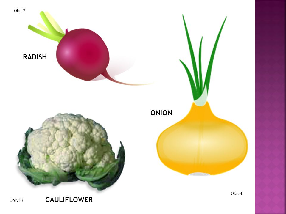 Obr.2 RADISH ONION Obr.4 CAULIFLOWER Obr.13