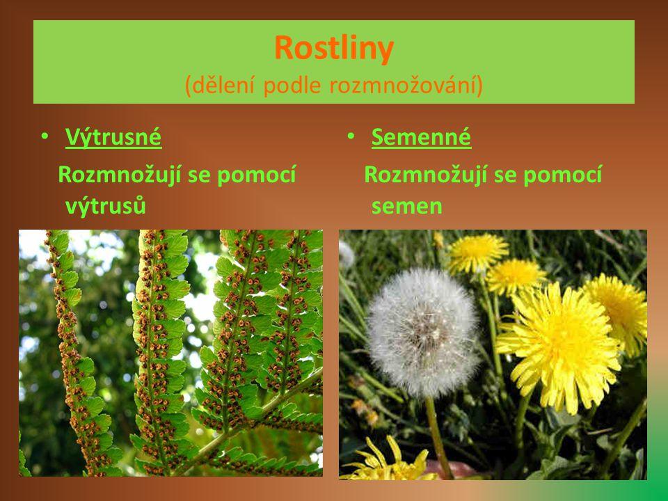 Rostliny (dělení podle rozmnožování)