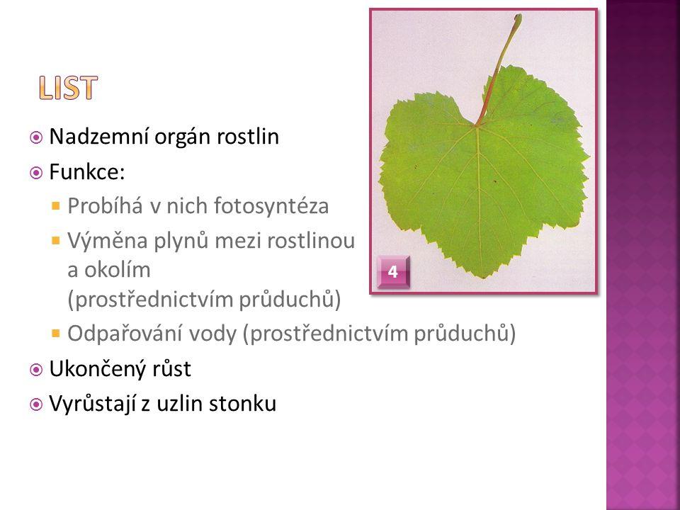 List Nadzemní orgán rostlin Funkce: Probíhá v nich fotosyntéza