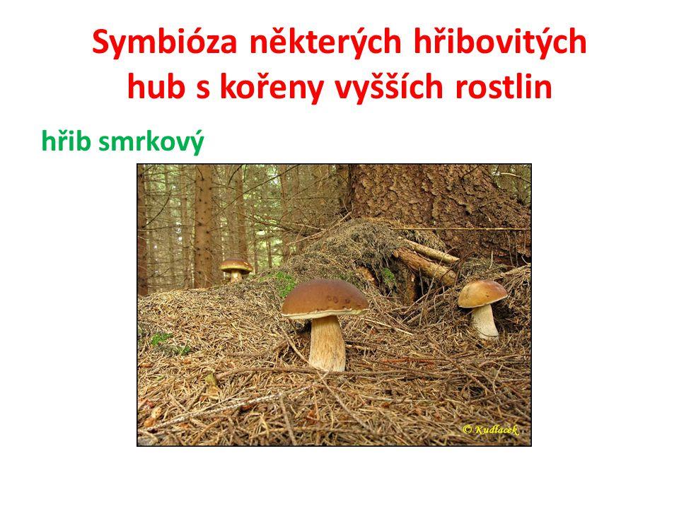 Symbióza některých hřibovitých hub s kořeny vyšších rostlin