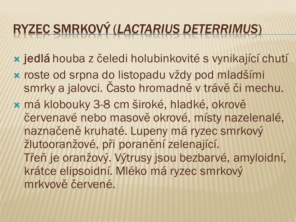 Ryzec smrkový (Lactarius deterrimus)